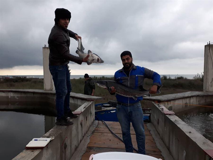 بهره برداری آزمایشی از فاز اول مجتمع پرورش ماهیان خاویاری لاریم