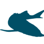 خاویار تخمک عملآوری شده ماهیان خاویاری (استورژن) میباشد و علیرغم اینکه به تخمک گونههای بسیار زیادی از آبزیان واژه خاویار اطلاق میشود، کارشناسان معتقدند تنها تخمک این گونه به عنوان محصول خاویار شناخته میشود. خاویار تاسماهیان یکی از گرانبهاترین و لوکسترین غذاها در سطح جهان میباشد. گرانترین نوع آن خاویار استحصال شده از گونه فیل ماهی (بلوگا) میباشد که رقم ممتاز آن را با برند تجاری امپریال در جهان عرضه میکنند. همچنین خاویار ماهیان قرهبرون، چالباش، شیپ و اوزون برون نیز مورد علاقه و درخواست مشتریان می باشند. البته این گونهها مختص به ایران بوده و خاویار گونههای تاسماهی سفید و سیبری که در اروپا و آمریکا گونه غالب پرورشی را تشکیل میدهند نیز از ارزش و شهرت جهانی برخوردارند.