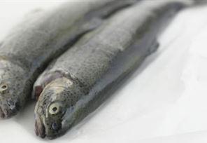از نوع ماهیهای سردآبی است و در زیرگروه ماهیهای آزاد جای میگیرد دارای بدنی فشرده و داری باله دمی بزرگتر ازماهی آزاد است. ساقه دمی آن مرتفع، سر کند و قسمت خارجی باله دمی تقریباً صاف است. قزل الا به عنوان منبع غنی پروتئین، به آسانی در دستگاه گوارش هضم و جذب می شود و تقریباً به طور کامل در بدن به مصرف می رسد.